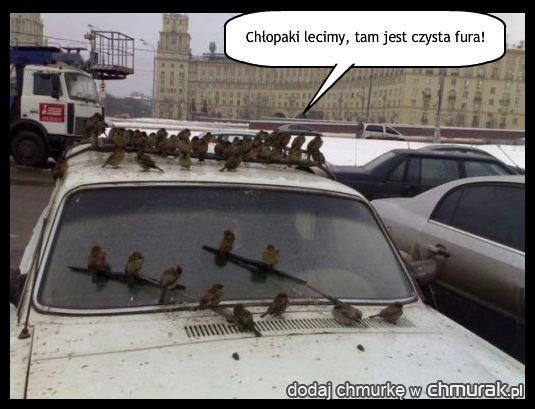 s-car, śmieszne auto, skup aut auto skup Świdnik